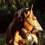 Olen Hoppe Profile Picture