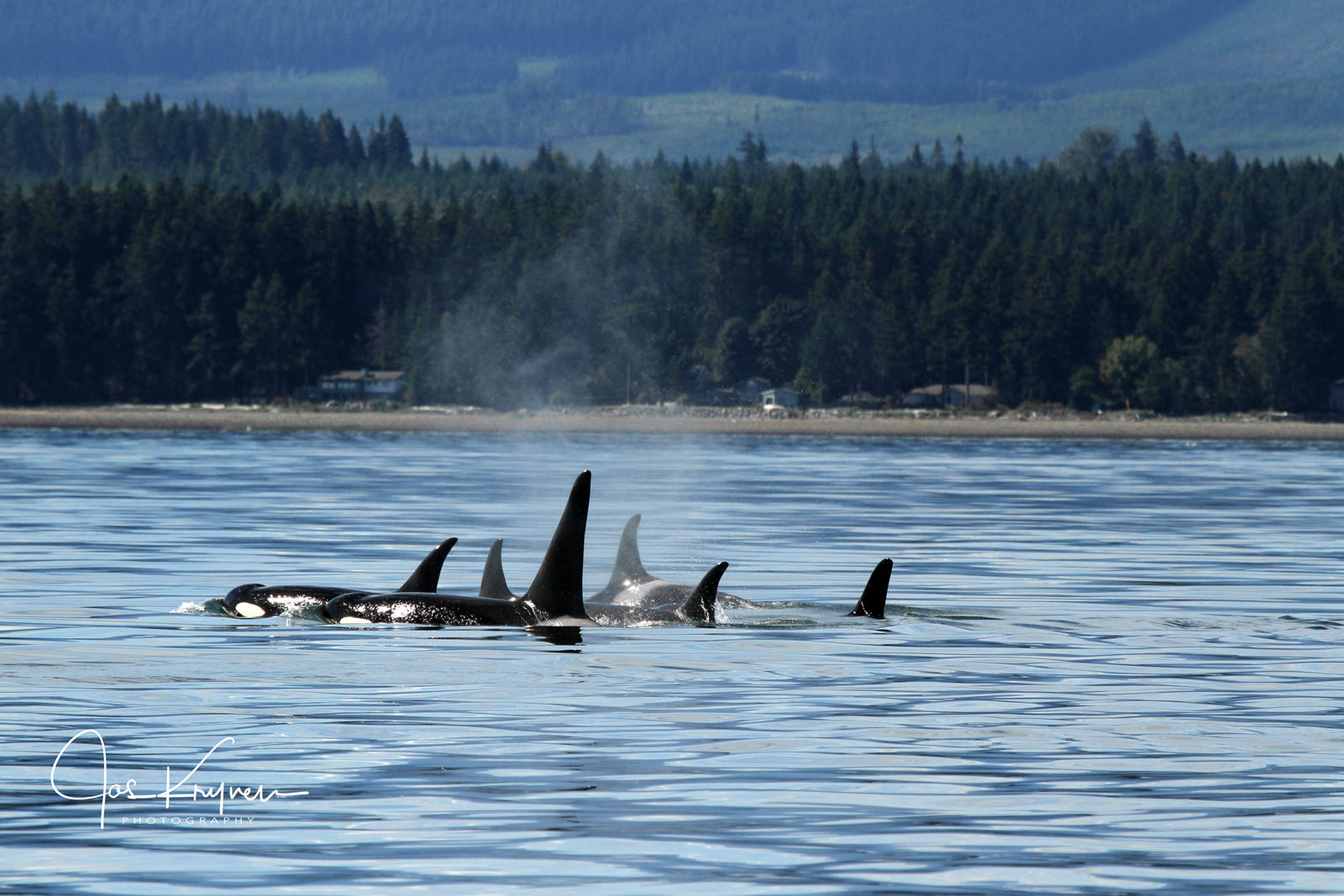 Vancouver Island Whale Watching | Adventure Tour Operators |