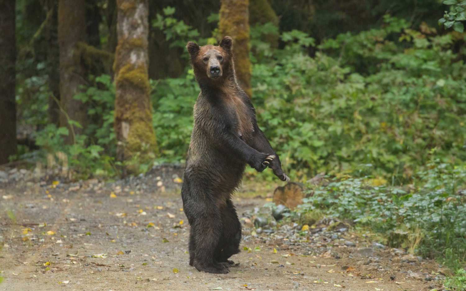 Grizzly Bear Tours Campbell River | Grizzly Expedition Tour |