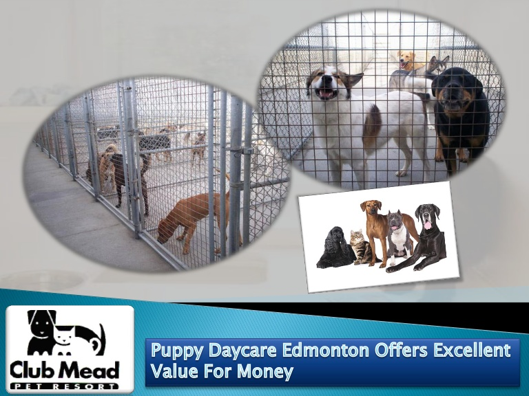 Puppy daycare edmonton offers excellent value for money
