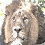 Alexander Zyambo profile picture